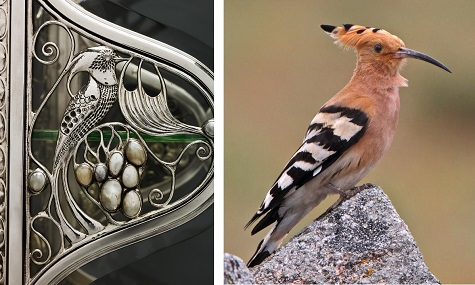 detail of Wittgenstein Vitrine; Juan Lacruz Martín, Eurasian Hoopoe, photograph. The Internet Bird Collection, Web. November 24, 2014.