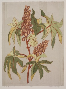 Florence E. McClung, Castor Beans, n.d., Dallas Museum of Art, gift of Florence E. McClung.