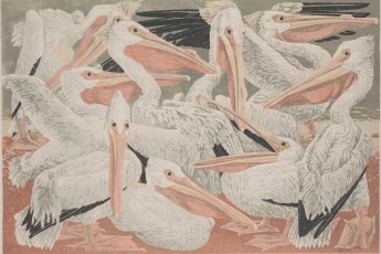 "Janet E. Turner, ""Pelicans,"" 1951, color silkscreen, Dallas Museum of Art, Dallas Art Association Purchase, 1960.99, © Estate of Janet E. Turner"