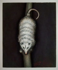 "John Breckinridge Martin, ""Possum,"" 1910, pastels, Dallas Museum of Art, gift of Mrs. Arthur Kramer, Sr., 1950.95"